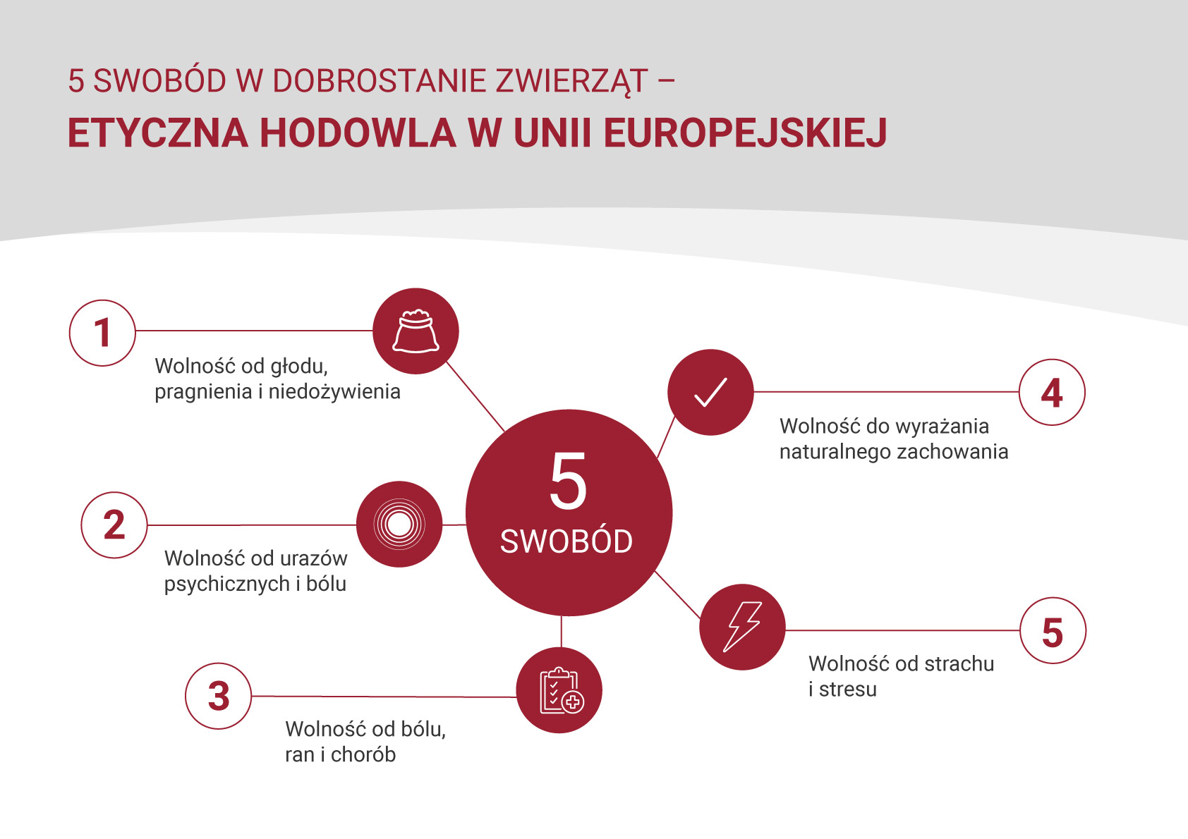 5 swobód w dobrostanie zwierząt – etyczna hodowla w Unii Europejskiej