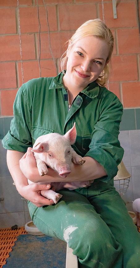 european pig - meat
