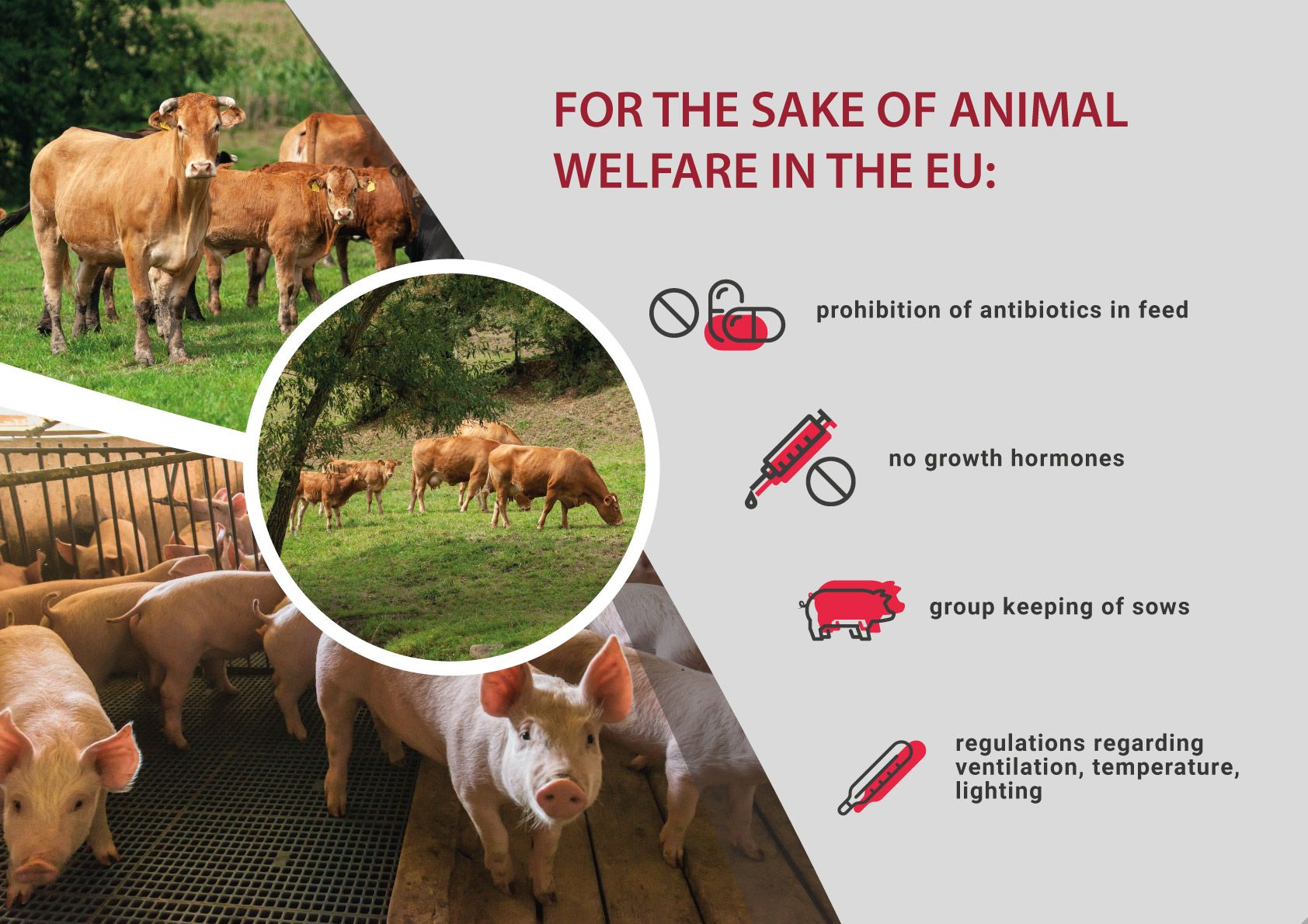 Animal welfare in the European Union – 40 years of history, hundreds of years of tradition
