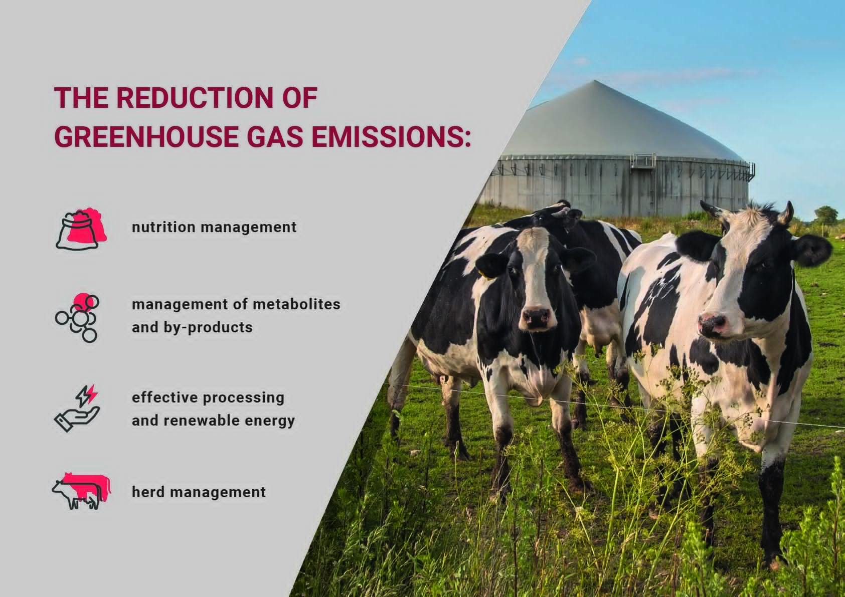 European meat production – effective practices for the reduction of greenhouse gases